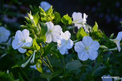 jardin,papillons,anniversaire d'Ines,bricolage 190.JPG