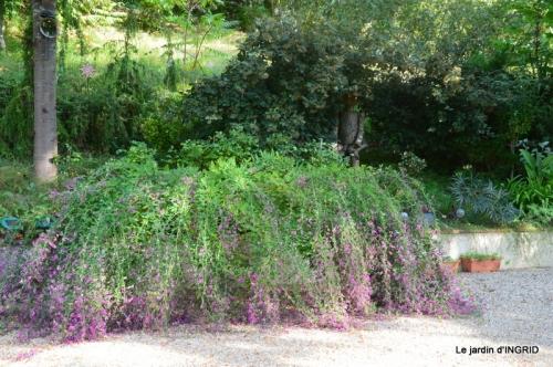 male ancienne,septembre jardin,couronne,bouquet 064.JPG