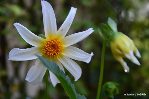 Fleurettes,Dordogne,jardin 124.JPG