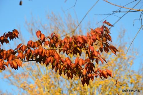 fin de l'automne,Lalinde,bouquet de l'avent 045.JPG