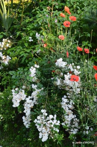 jardin,chez Bernadette,puces,cygnes,pluie 038.JPG
