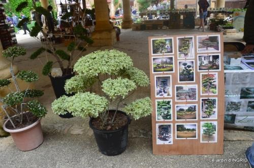 Colombier,Cadouin,jardin,roses,pluie 058.JPG