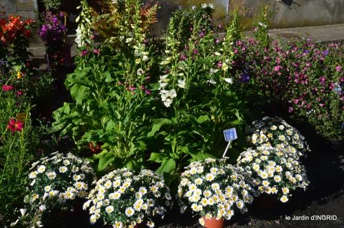 coquelicots,fête des fleurs Lalinde,fouleix,jardinage 074.JPG