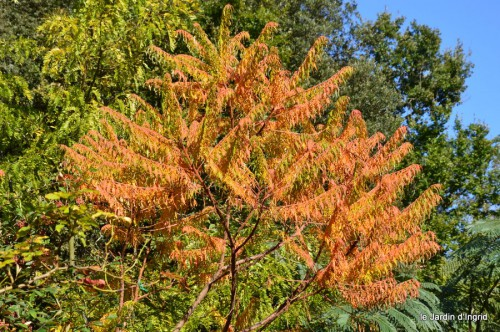 jardin octobre,chez Marylaur,Arnaud ,Ariane,la mer,sauges 223.JPG