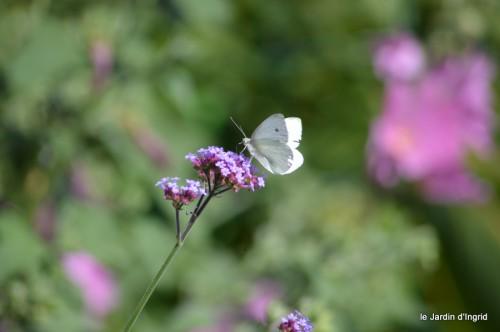 coeur des fleurs,papillons,libellules 156.JPG