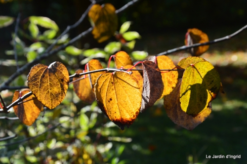 jardin automne,Arya avec Nicky 009.JPG