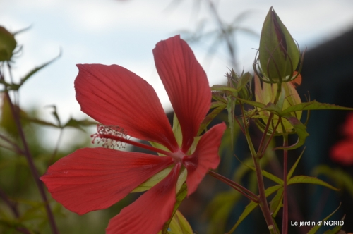 orage,puces,bouquet,Anniv.Ines,Brantome,Jardins d'eau 333.JPG