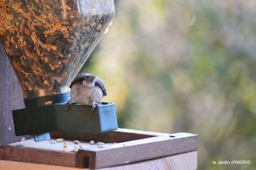 Julie,givre,oiseaux,lutins 009.JPG