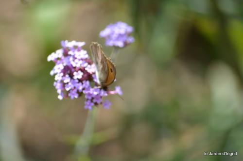 coeur des fleurs,papillons,libellules 119.JPG