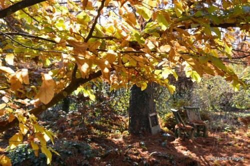 dernières automne,givre,chat 061.JPG