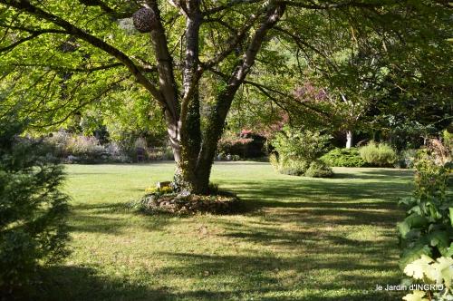 cygnes,jardin,apres la tonte 066.JPG