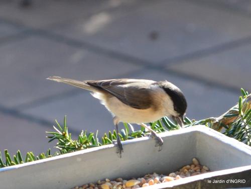 Mompazier,oiseaux,givre 109.JPG