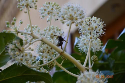 papillon,libellule,sauterelle,coccinelle,abeille,bourdon,araignée