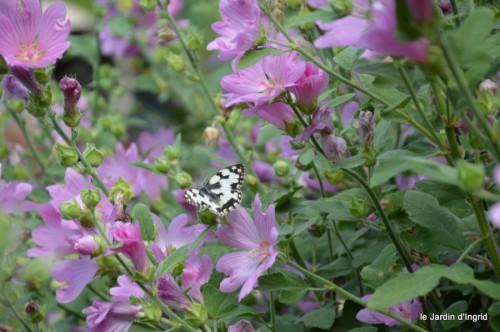 jardin matin,Romane ,nicky 033.JPG