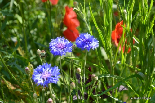 jachère,couleur,bouquet 042.JPG