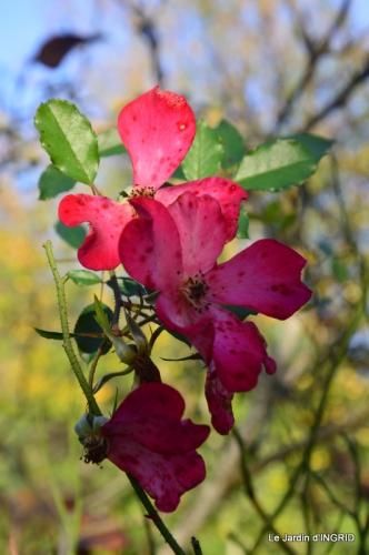 jardin, feuilles,sauges,gloriette,land art 114.JPG