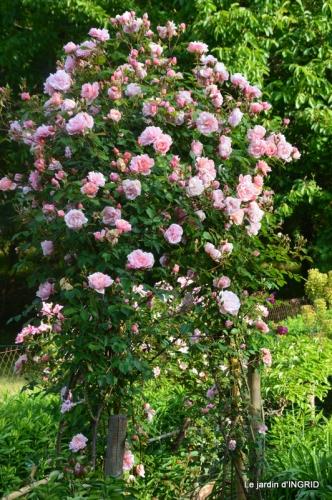 Trémolat,petit jardin,Julie 092.JPG