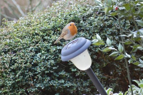 les oiseaux sur terrasse 004.JPG