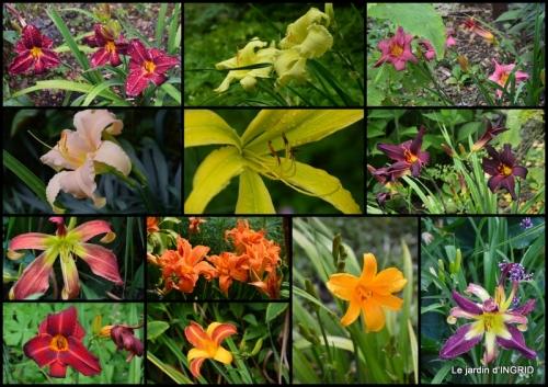 2020-06-13 hirondelles,décos chevreuils,jardin,hémérocalles.jpg