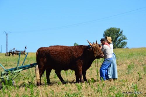 jardin,traditions rurales,les filles,Romane,citouilles,coeurs 124.JPG