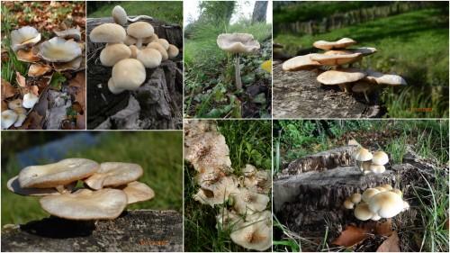2012-10-14 champignons,citrouilles,st Mayme de Péreyrol,fuschias,jardin aut.jpg