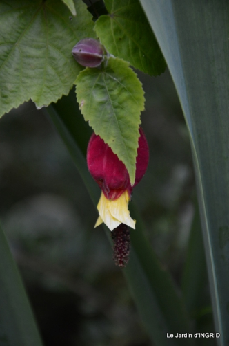 jardin juin,cabane,bouquet 077.JPG