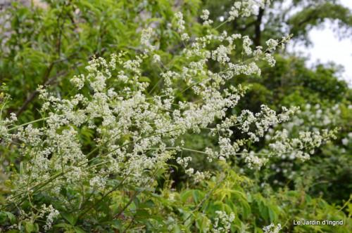 canal,fleurs blanches,marguerites,LE FLEIX,osier 042.JPG