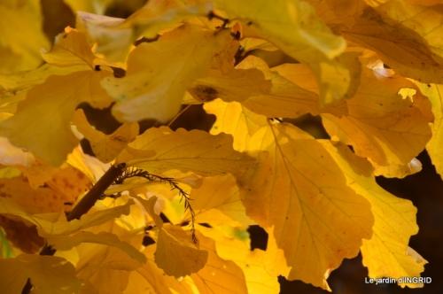 canal,automne,tonte des feuilles 066.JPG