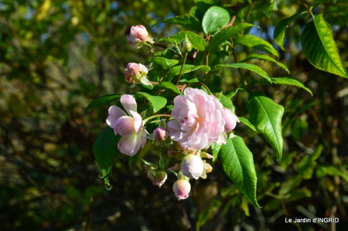 Romefort,bord de Creuse,vent,feuilles,jardin,canal 121.JPG