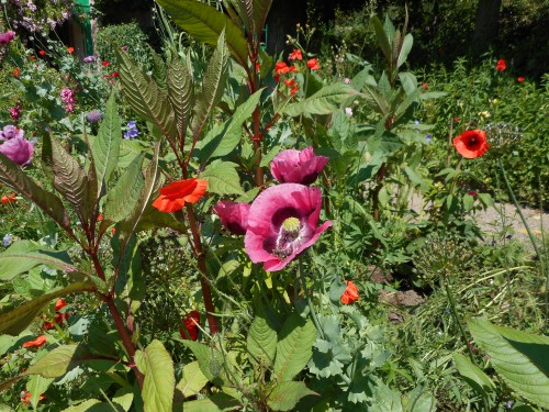 Normandie,jardin Monet,baie de Somme,chez Marylaur 180.JPG