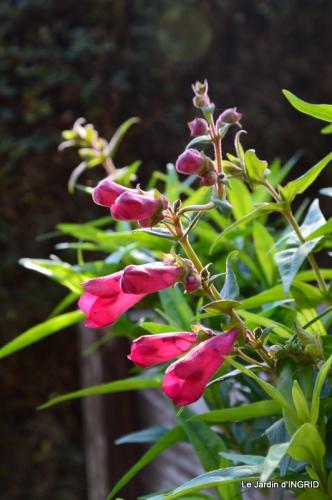 oiseaux,travaux,arbustes,les dernières fleurs 080.JPG