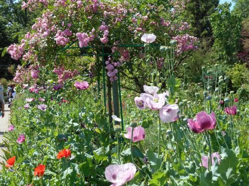 Normandie,jardin Monet,baie de Somme,chez Marylaur 189.JPG