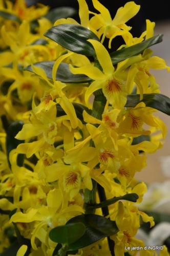 Orchidées,Noel jardiland,lever du soleil 026.JPG