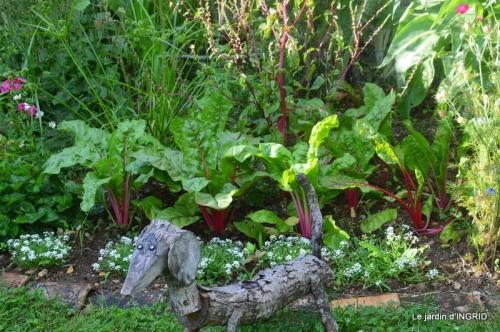 mon jardin,dégats buis, 091.JPG
