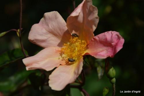 chez Dédé,papillons,Claudine Dordogne,champignons,toile d'araign 092.JPG