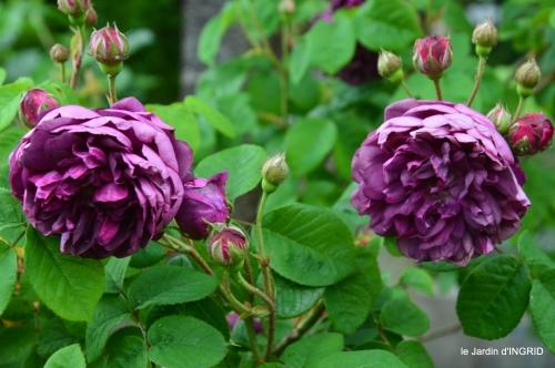 Sophie,roses,cygnes,pavots,jardin 038-001.JPG
