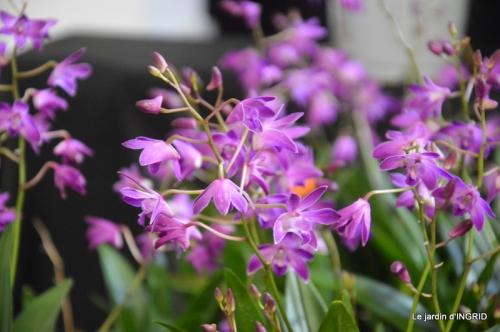 canal,jardin,Mombazillac,bonzais,orchidées 155.JPG