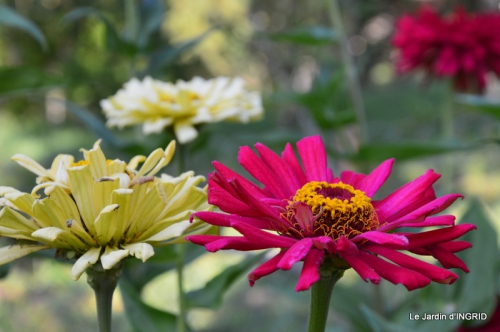 jardin Mme Perichou,grandes fleurs,bouquet,jardin 005.JPG