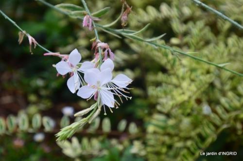 bouquet d ete,Plambouissin,grotte ,Erignac,Campagne,Julie 021.JPG