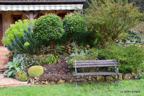 jardin ,cane sauvage,paquerettes,tulipes 039.JPG