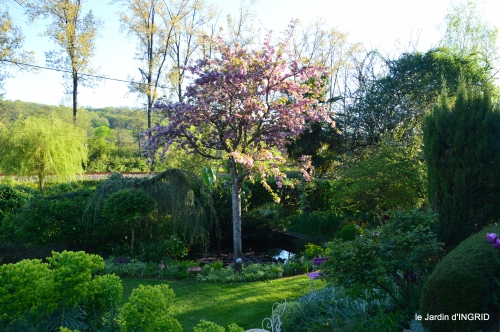 tour de jardin d'avril ,tonte 064.JPG