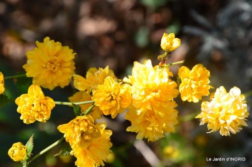 jardin printemps 071.JPG