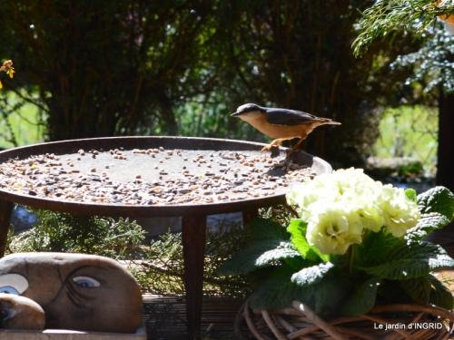 vue sur la terrasse,crocus,oiseaux, 042.JPG