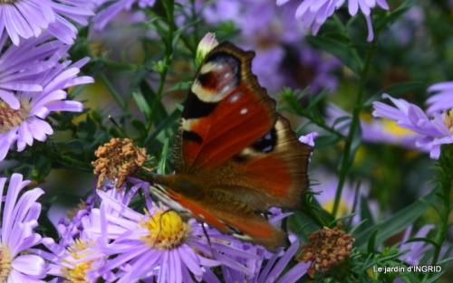 jardin automne,mariage Estor,barrage Bergerac 020.JPG