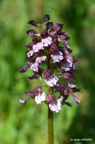 colline,orchidée,nature,jardin fleuri 004.JPG