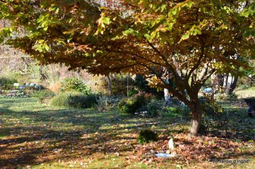 dernières automne,givre,chat 066.JPG