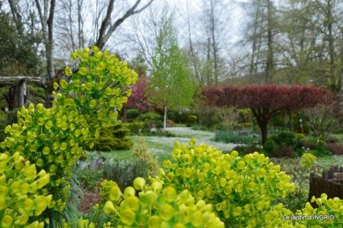 jardin confiné ,osier,magnolia jaune 073.JPG
