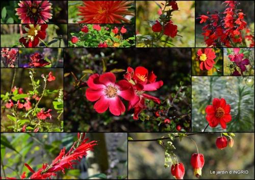 2015-10-01 jardin Mme Perichou,grandes fleurs,bouquet,jardin.jpg