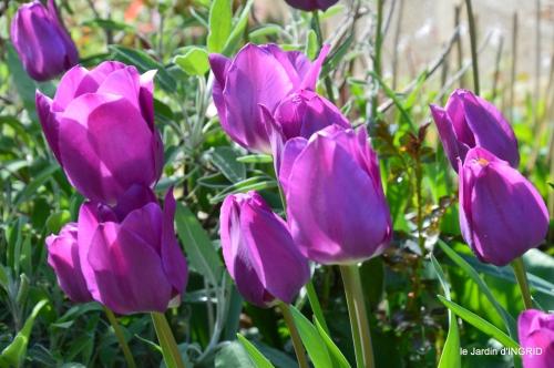 première roses,achats,jardin blanc 034.JPG
