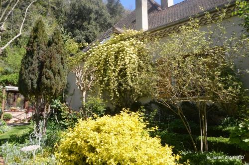 colline,orchidée,nature,jardin fleuri 132.JPG